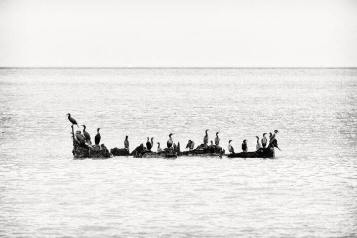 Facing the sea