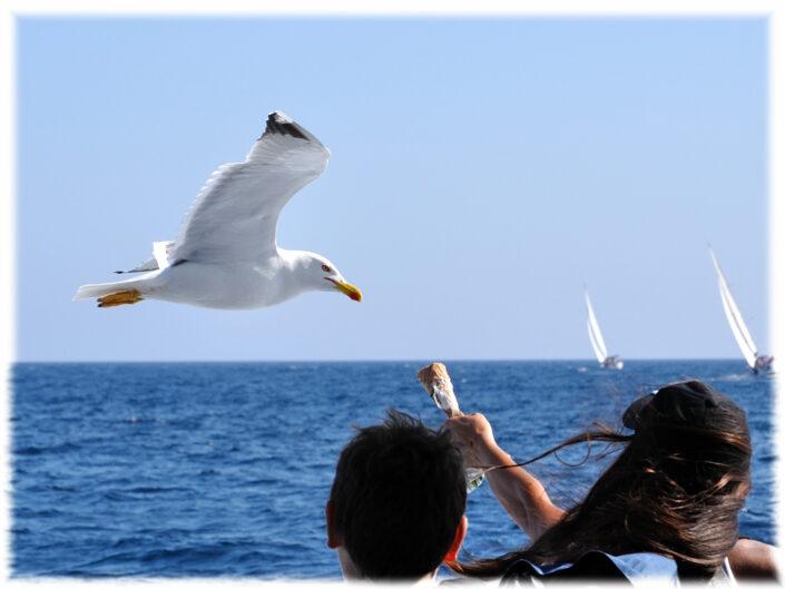 Gull - Goéland - France