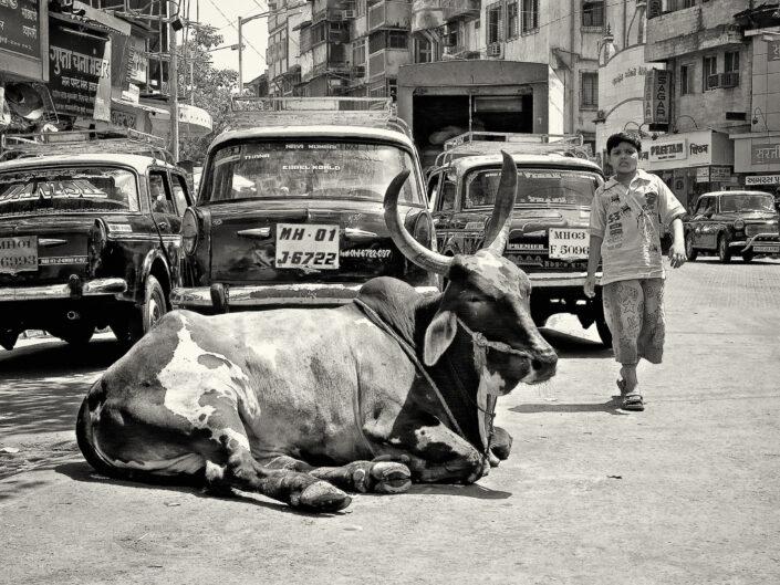 Mumbai - L'enfant et la vache